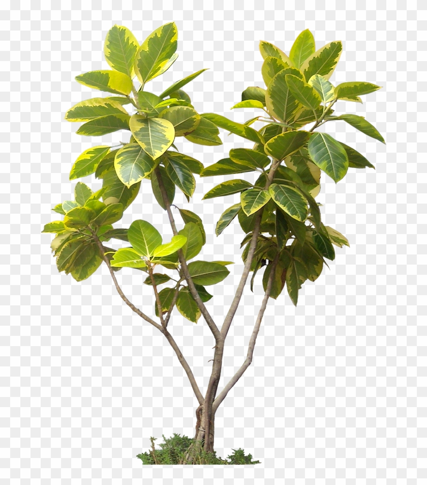 High Resolution Trees Png , Png Download - Tropical Plants