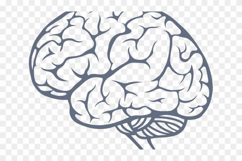 Brain Png Transparent Images Transparent Background Brain Png Png Download 640x480 602746 Pngfind