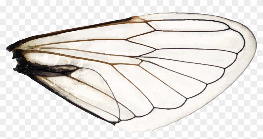 Wings Of A Dragonfly Right Aporia Hd Png Download