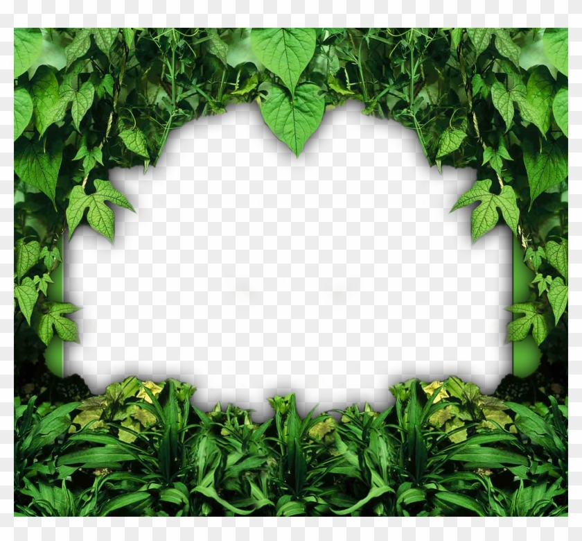 go to image nature photo frames png transparent png 1588x1400 6116747 pngfind go to image nature photo frames png