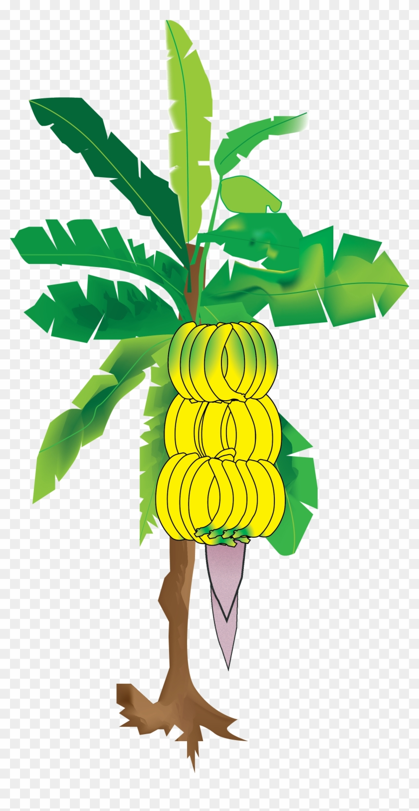 My Illustration Of The Banana Tree From Sun S Eye An Banana Tree Png Images Hd Transparent Png 1751x3305 6121680 Pngfind