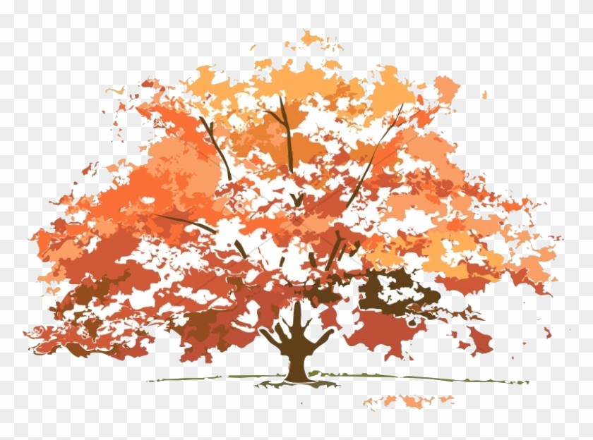 Trees colorful. Fall tree colors maple