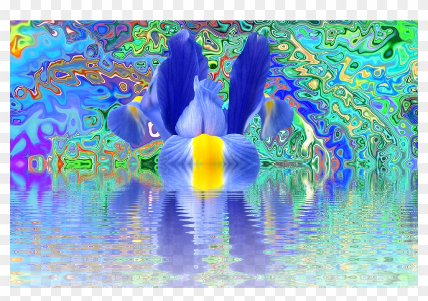Iris Blossom Bloom Flower Effect Nature Blue - Illustration