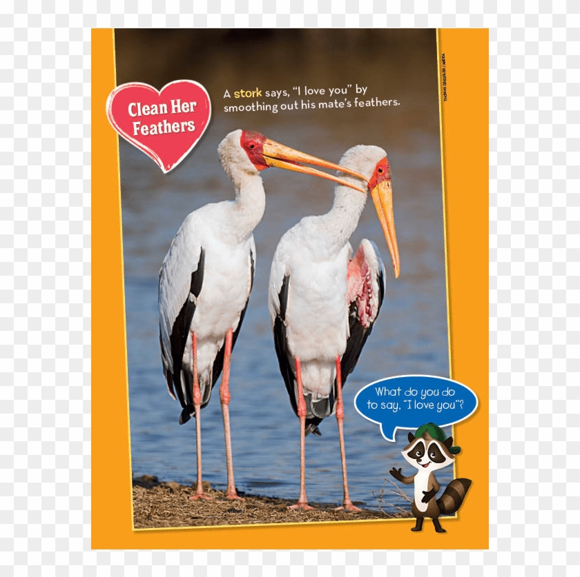 Ranger Rick Jr Love Birds February 2014 - Stork, HD Png Download