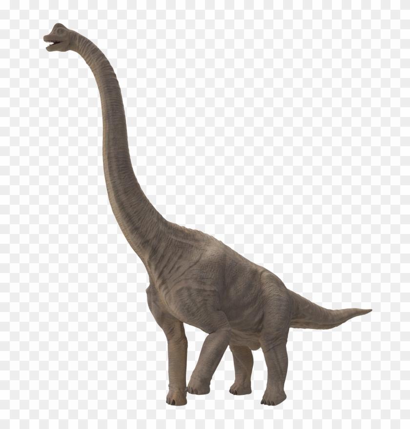 Sauropod Png File Dinosaurios Cuello Largo Nombre Transparent Png 2048x2048 6323824 Pngfind Tyrannosaurus velociraptor indoraptor dinosaur indominus rex, dinosaur png. sauropod png file dinosaurios cuello