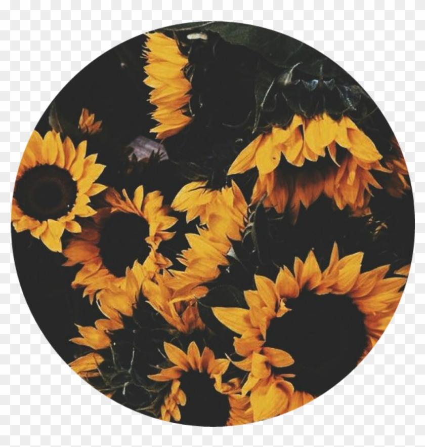 Girasol Girasoles Girasoles🌻 Flores Happy Circle
