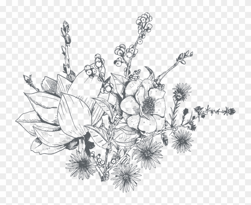 Drawings of flowers transparent. Clip art freeuse amaryllis