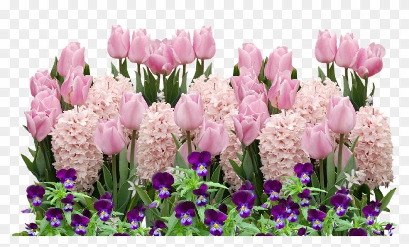 Spring Tulips Easter Flower Flowers Spring Flower