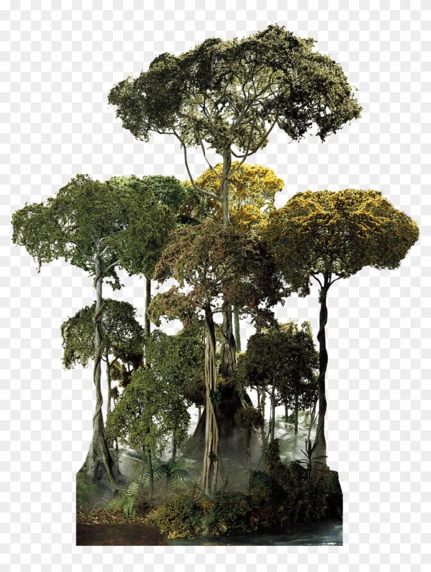 Tropical Rainforest Tree Png, Transparent Png - 1440x1845