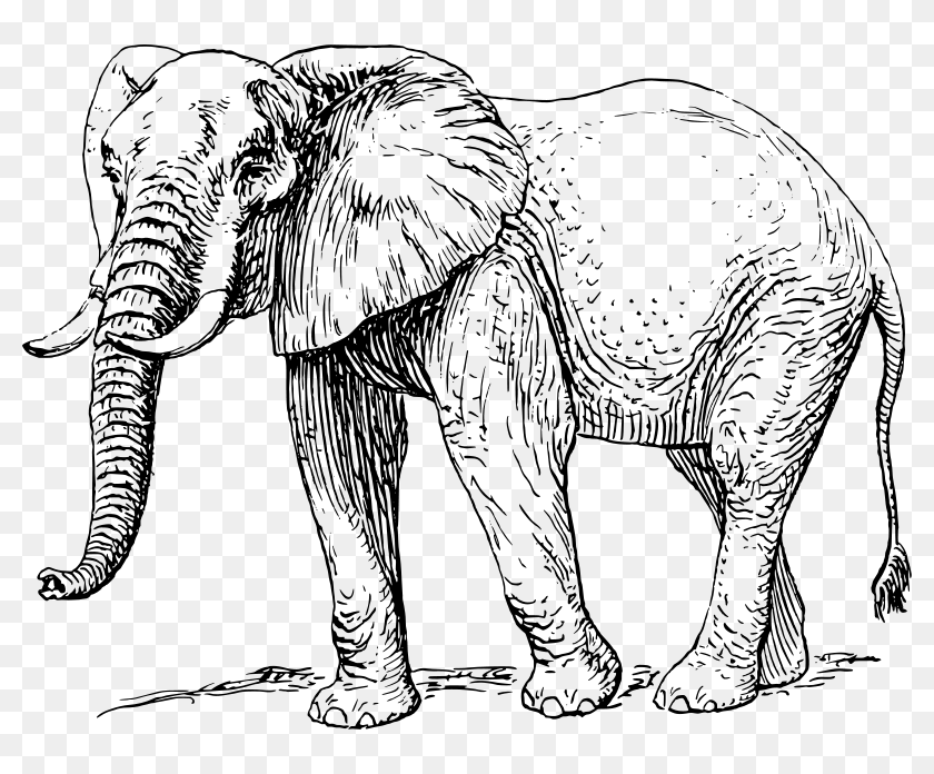 Free Vector Elephant Hd Png Download 800x616 6881560 Pngfind Choose from over a million free vectors, clipart graphics, vector art images, design templates, and illustrations created by artists worldwide! free vector elephant hd png download