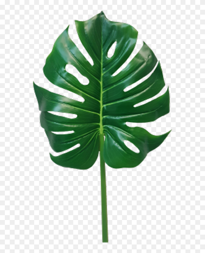 Jungle Leaves Png Monstera Leaf Png Monstera Leaf Transparent Png Download 577x955 6897962 Pngfind Choose from over a million free vectors, clipart graphics, vector art images, design templates, and illustrations created by artists worldwide! jungle leaves png monstera leaf png