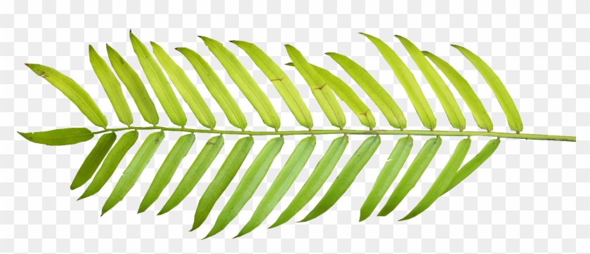 Palm Watercolor Tropical Leaves Png Transparent Png 1566x624 75698 Pngfind Download this beautiful watercolor leaves frame, watercolor, color, colorful transparent png or vector file for free. palm watercolor tropical leaves png
