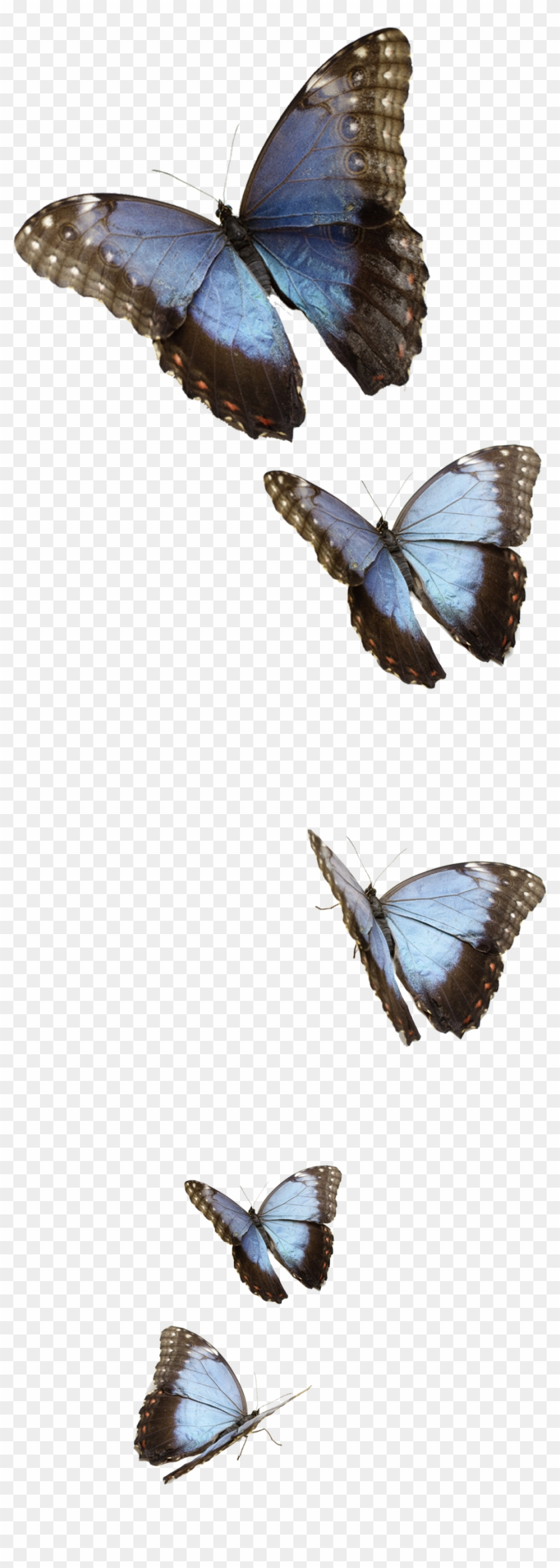 Transparent Blue Butterfly Png, Png Download - 1200x2880(#81072