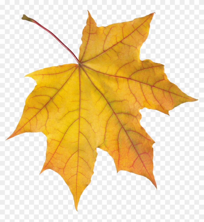Autumn Png Leaf Autumn Background Cartoon White Transparent Png 2348x2436 84401 Pngfind