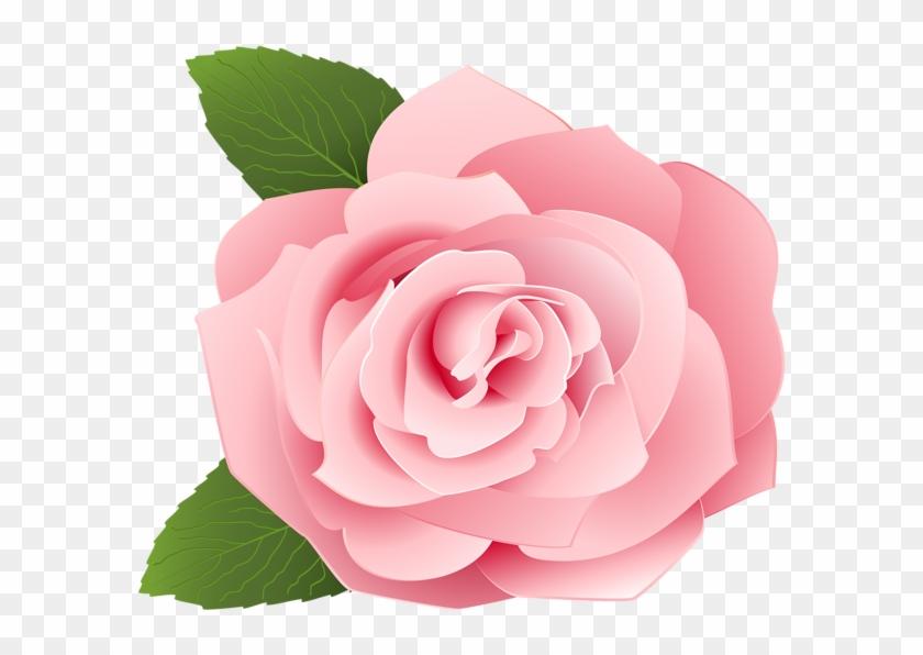 Rose Png Rose Pink Flower Cartoon Transparent Png 600x523