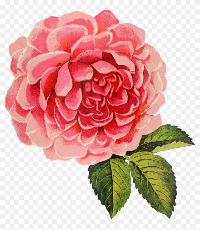 09b5f7b0e4361 Vintage Rose Png - Transparent Background Vintage Flower Png, Png ...