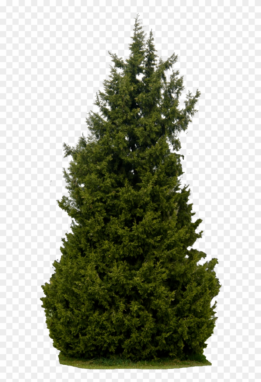 Realistic Tree Transparent Background Png Tree Png Elevation Png