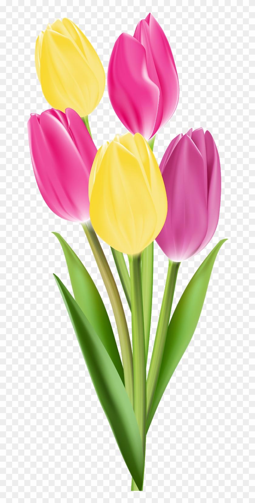 Tulip Flower Bouquet Clip Art Single Flowers Png Transparent Png 707x1600 884939 Pngfind