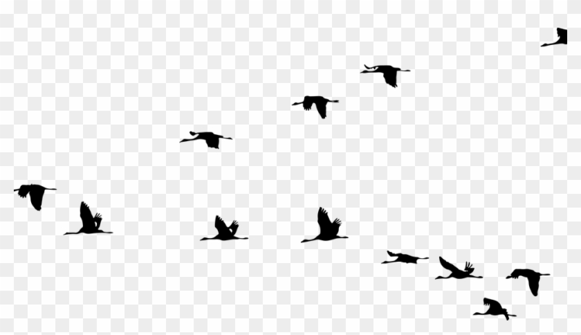 animals birds cranes flying formation silhouette burung png transparent png 960x508 929422 pngfind animals birds cranes flying formation