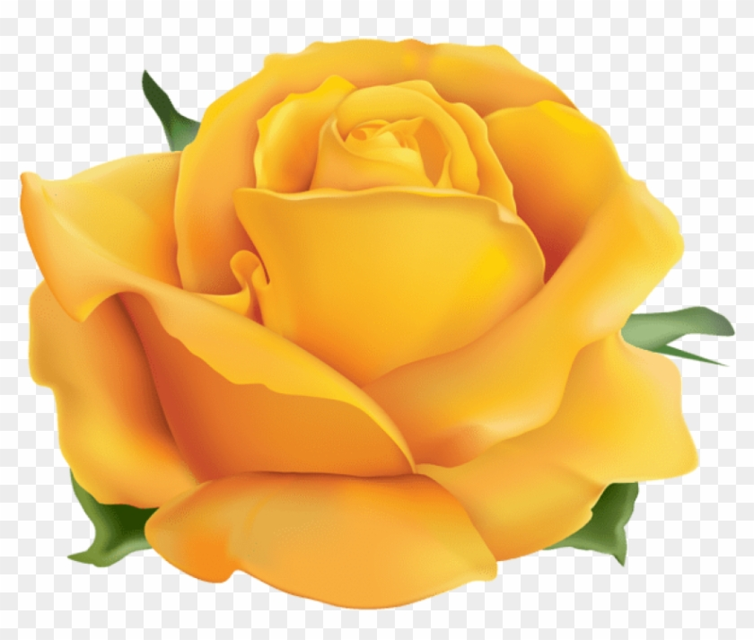 Free Png Download Yellow Rose Png Png Images Background Rose