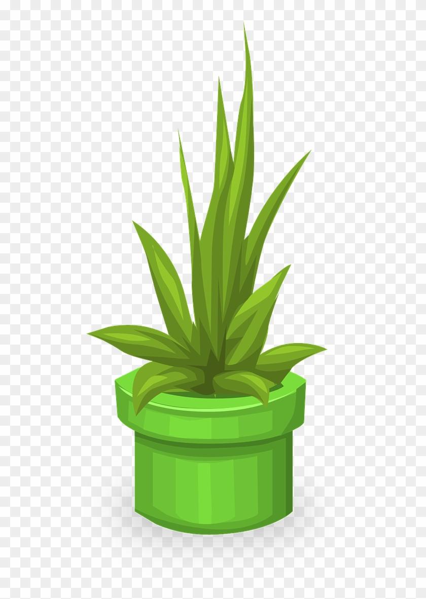 plants greenery leaves vektor pohon hias png transparent png 894x1280 970868 pngfind vektor pohon hias png transparent png