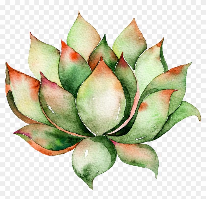 Watercolor Succulent Png Clip Art Download Transparent Png 916x842 998651 Pngfind